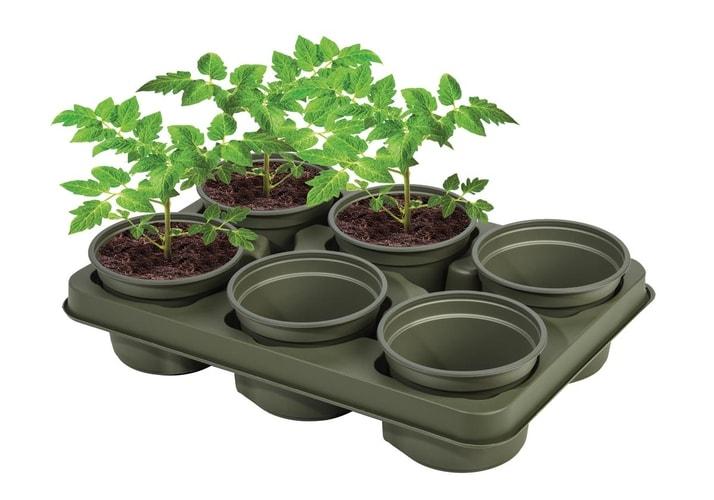 Garland's Bio-Based Growing Tray