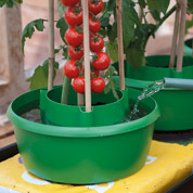 3 halos on grow bag watering